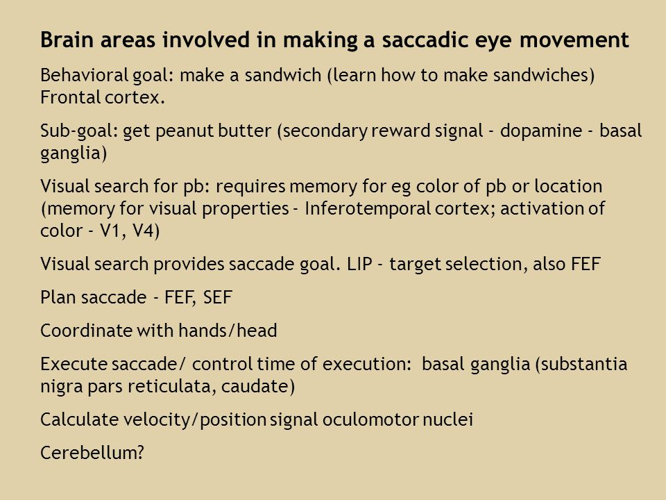 Brain areas involved in making a saccadic eye movement Behavioral goal: make a sandwich (learn how to make sandwiches) Frontal cortex.