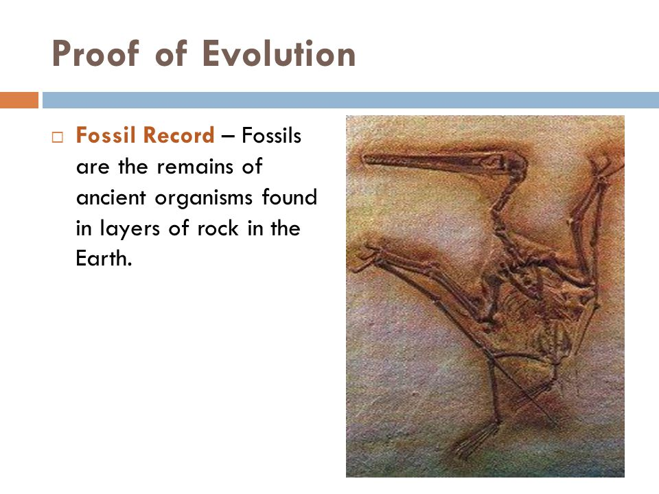 Proof of Evolution  Fossil Record – Fossils are the remains of ancient organisms found in layers of rock in the Earth.