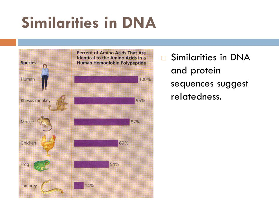 Similarities in DNA  Similarities in DNA and protein sequences suggest relatedness.