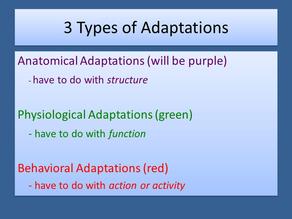3 Types of Adaptations Anatomical Adaptations (will be purple) - have to do with structure Physiological Adaptations (green) - have to do with function Behavioral Adaptations (red) - have to do with action or activity Anatomical Adaptations (will be purple) - have to do with structure Physiological Adaptations (green) - have to do with function Behavioral Adaptations (red) - have to do with action or activity
