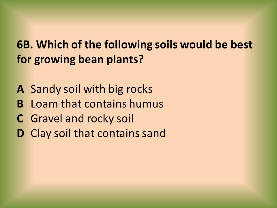 6B. Which of the following soils would be best for growing bean plants? A Sandy soil with big rocks B Loam that contains humus C Gravel and rocky soil