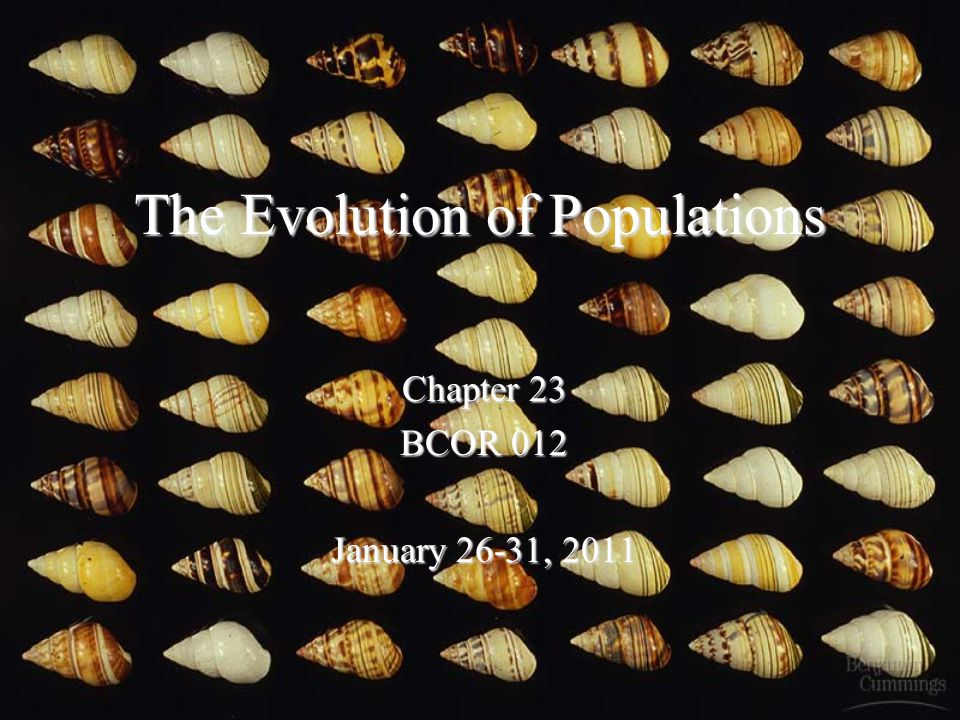 The Evolution of Populations Chapter 23 BCOR 012 January 26-31, 2011