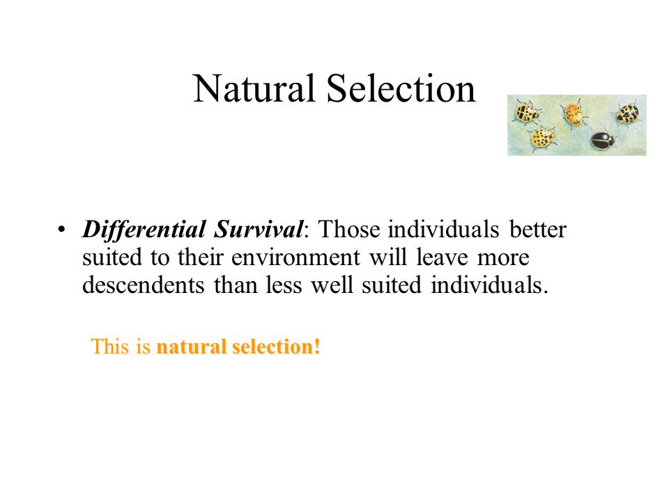 Natural Selection Differential Survival: Those individuals better suited to their environment will leave more descendents than less well suited individuals.