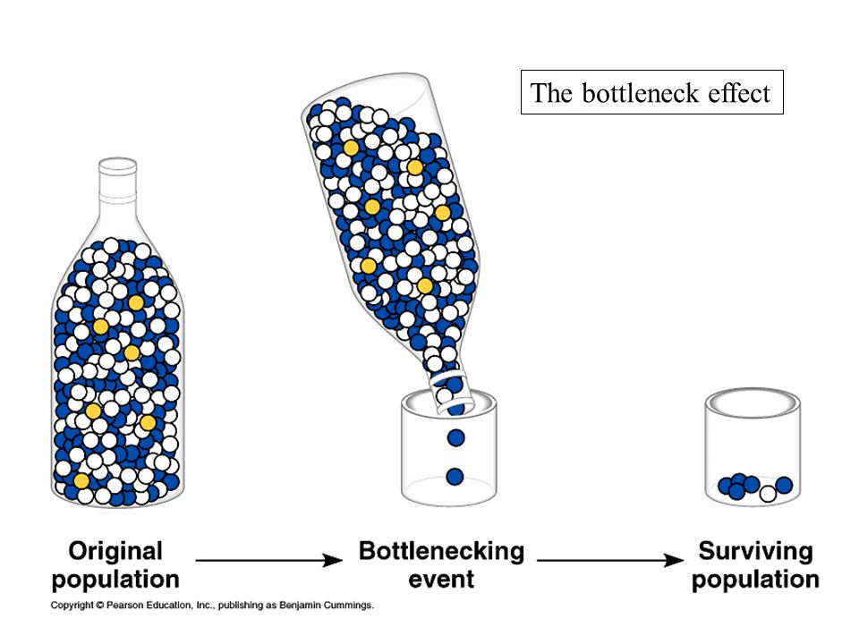 The bottleneck effect
