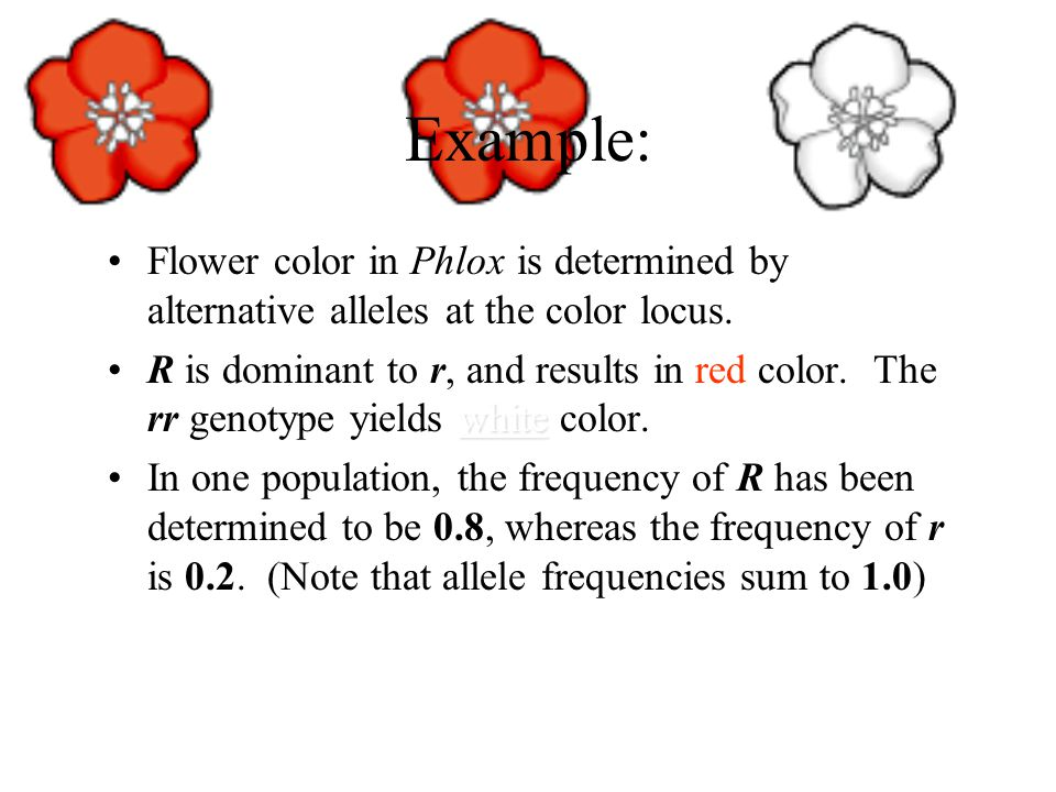 Example: Flower color in Phlox is determined by alternative alleles at the color locus.