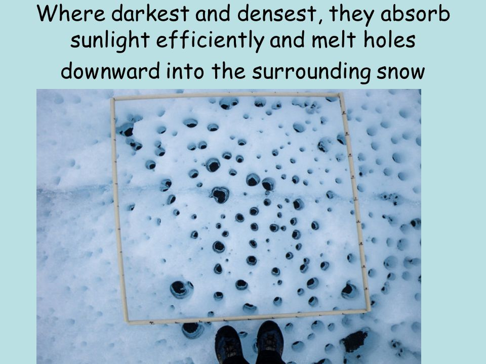 Where darkest and densest, they absorb sunlight efficiently and melt holes downward into the surrounding snow