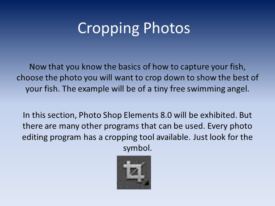 Cropping Photos Now that you know the basics of how to capture your fish, choose the photo you will want to crop down to show the best of your fish.