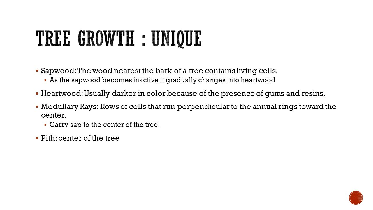  Sapwood: The wood nearest the bark of a tree contains living cells.  As the sapwood becomes inactive it gradually changes into heartwood.  Heartwo