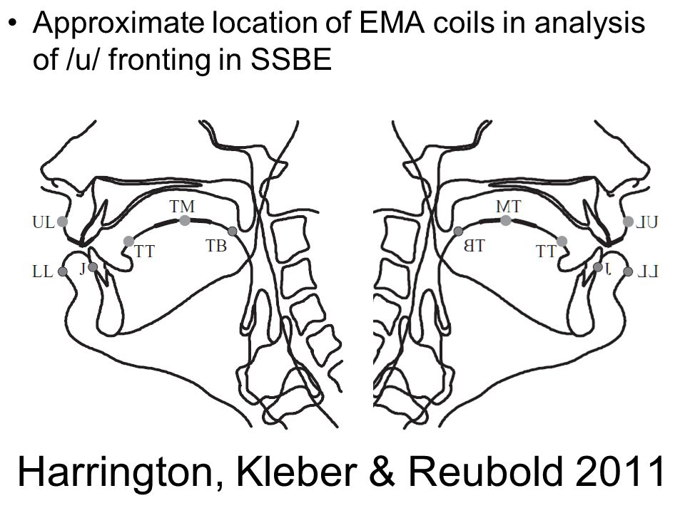 Harrington et al Approximate location of EMA coils in analysis of /u/ fronting in SSBE – 2-4mm back/below /i/