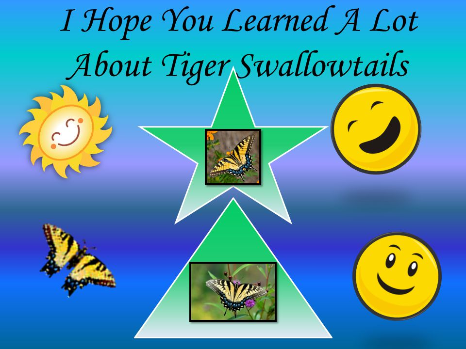 I Hope You Learned A Lot About Tiger Swallowtails z