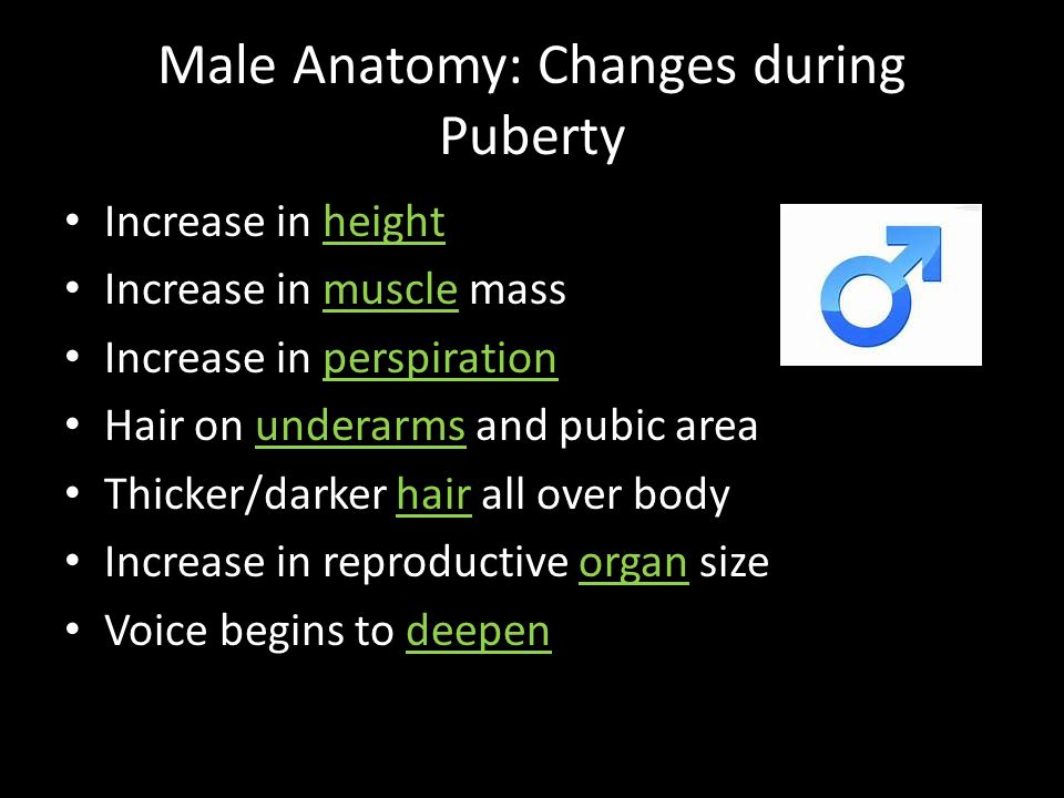 Male Anatomy: Changes during Puberty Increase in height Increase in muscle mass Increase in perspiration Hair on underarms and pubic area Thicker/dark