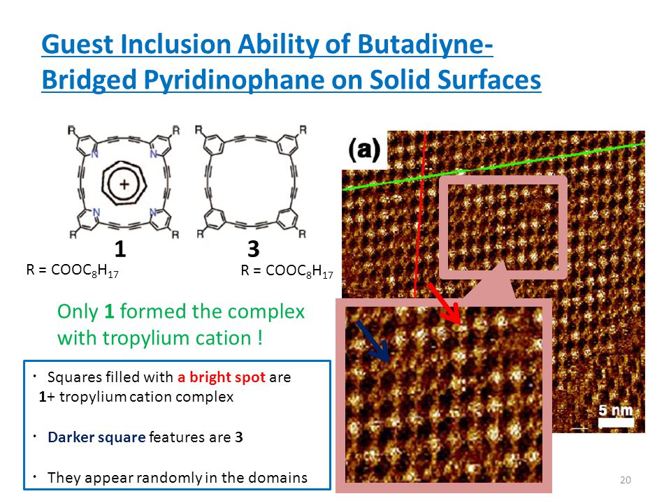 Guest Inclusion Ability of Butadiyne- Bridged Pyridinophane on Solid Surfaces ・ Squares filled with a bright spot are 1+ tropylium cation complex ・ Darker square features are 3 ・ They appear randomly in the domains 20 R = COOC 8 H 17 13 Only 1 formed the complex with tropylium cation !