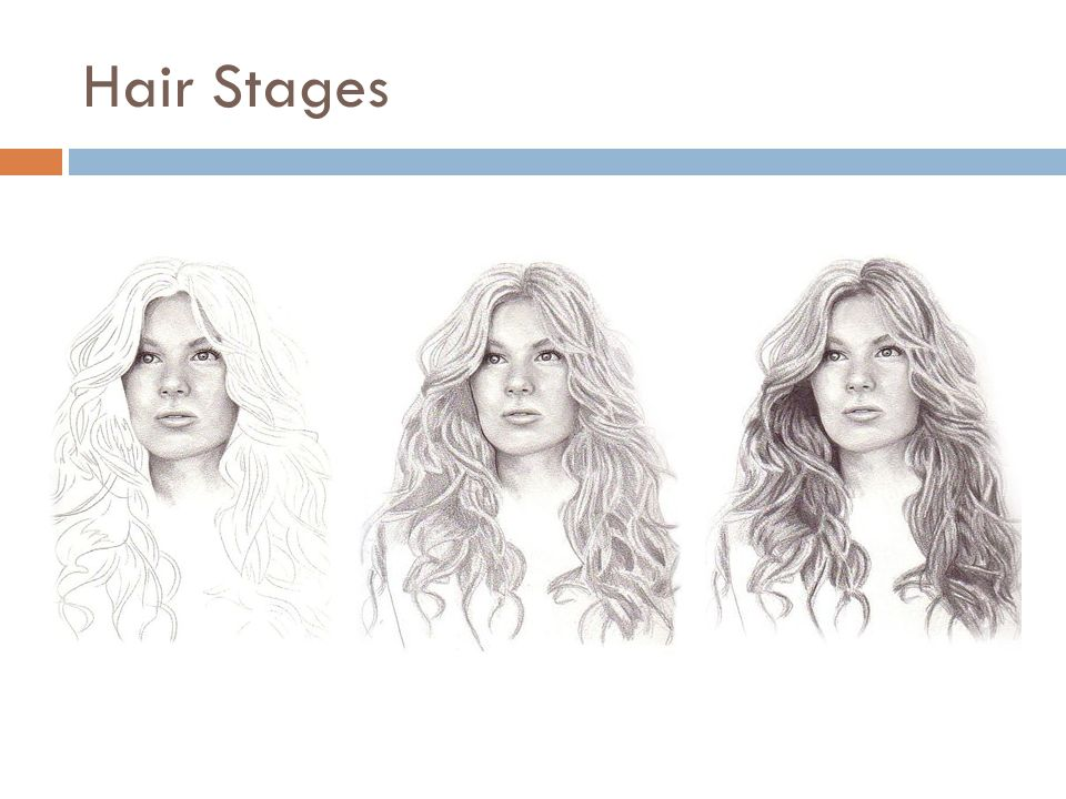 Hair Stages