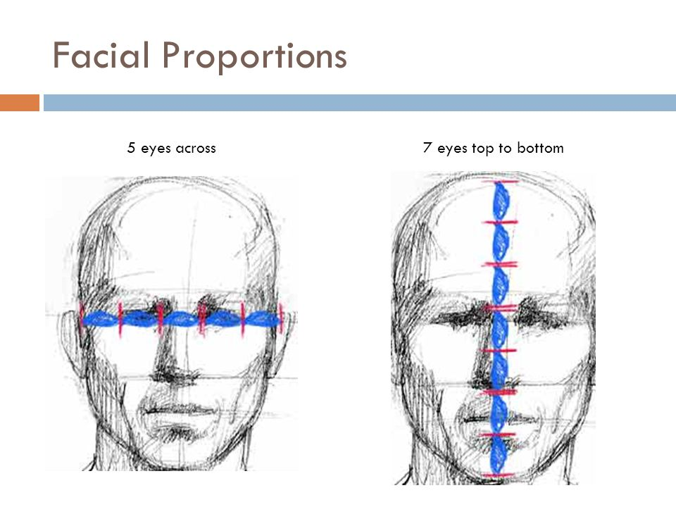 Facial Proportions 5 eyes across7 eyes top to bottom