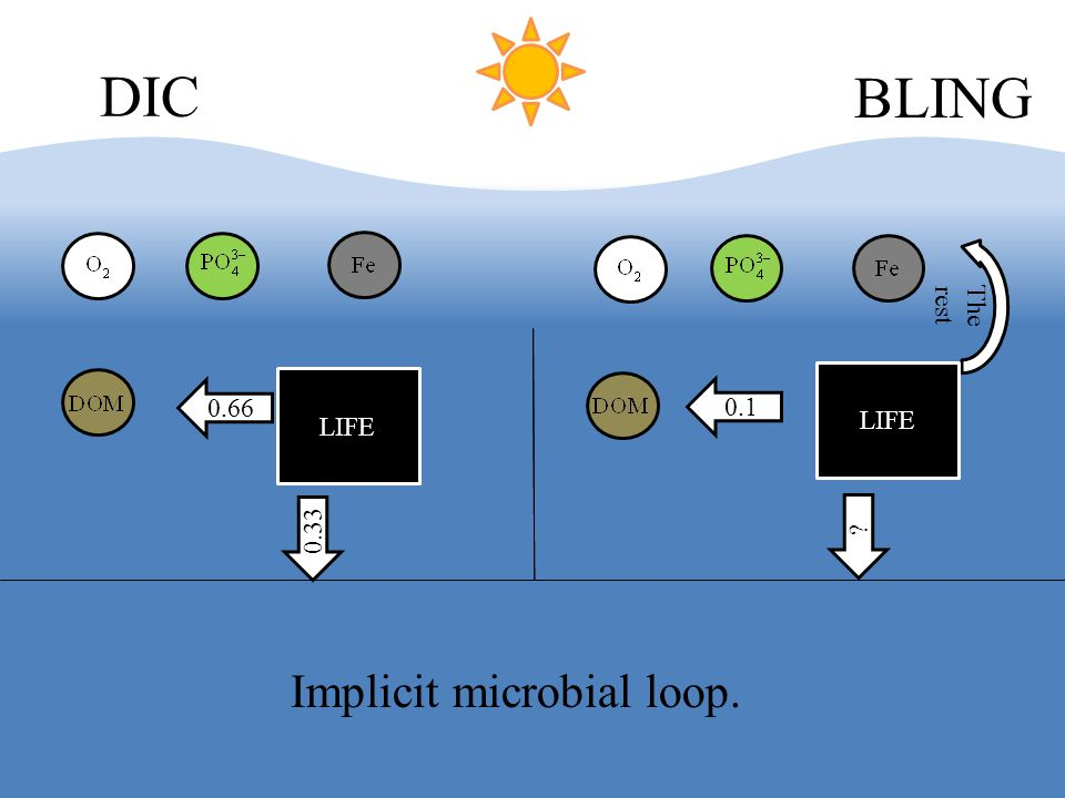 LIFE DIC BLING The rest 0.66 0.33 LIFE 0.1 ? Implicit microbial loop.