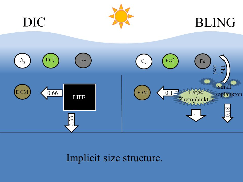 LIFE DIC BLING The rest 0.66 0.33 0.1 Small Phytoplankton Large Phytoplankton 1 0.18 Implicit size structure.