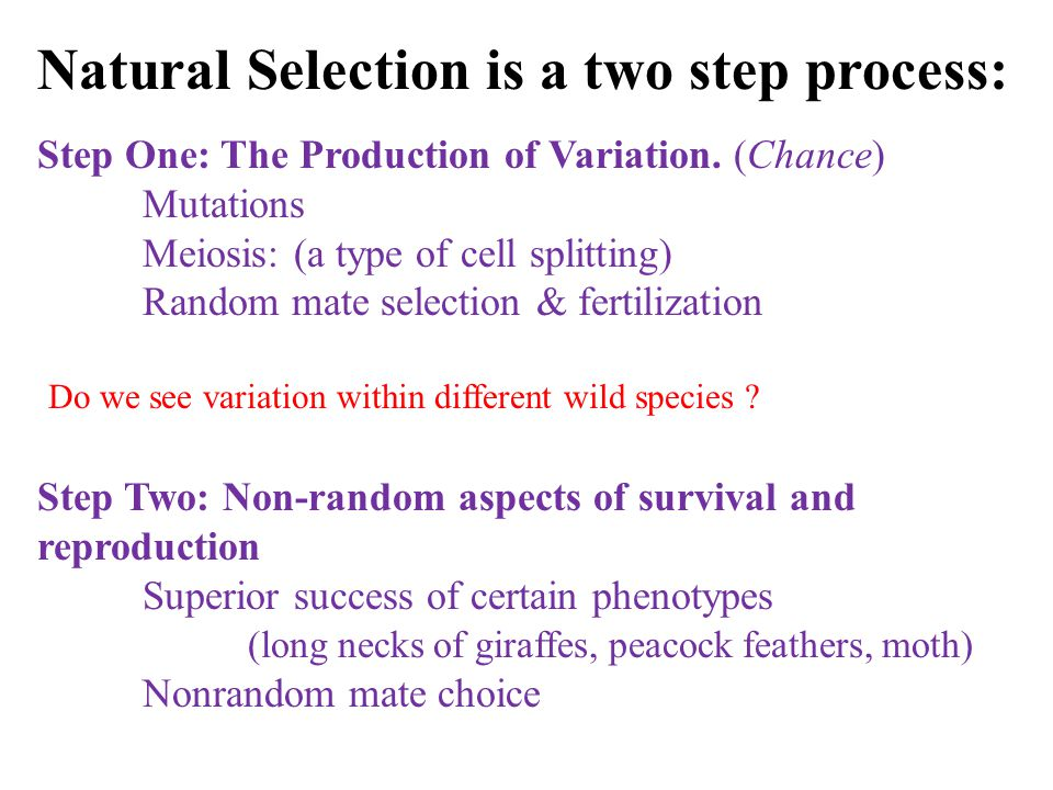 Do we see variation within different wild species .
