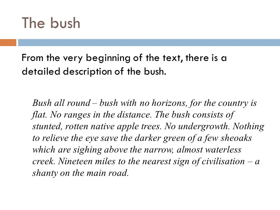The bush Bush all round – bush with no horizons, for the country is flat.