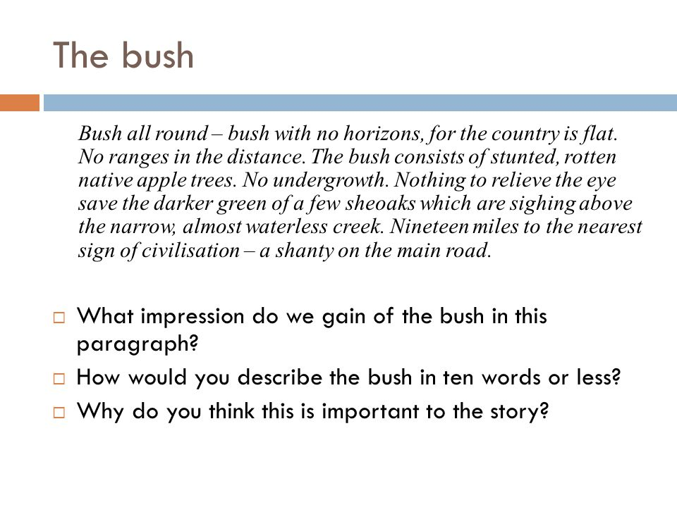 The bush  Draw up the following table and complete it based on the second paragraph of the text.