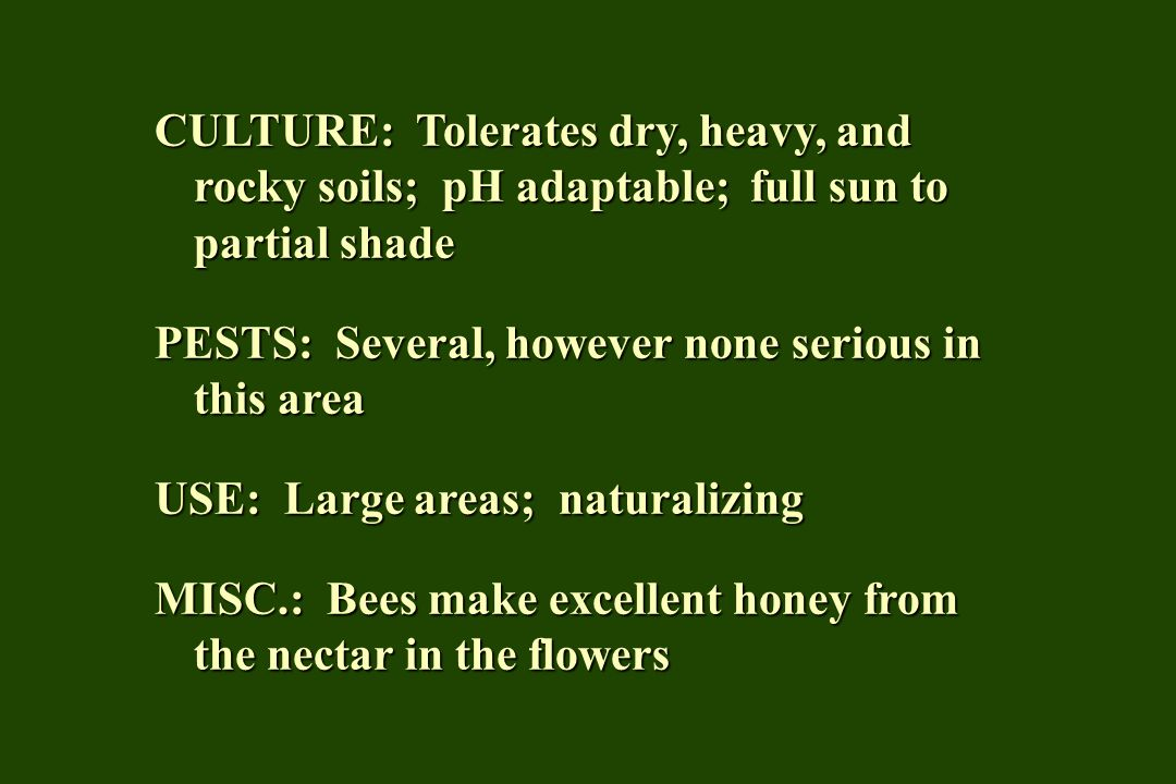 CULTURE: Tolerates dry, heavy, and rocky soils; pH adaptable; full sun to partial shade PESTS: Several, however none serious in this area USE: Large areas; naturalizing MISC.: Bees make excellent honey from the nectar in the flowers