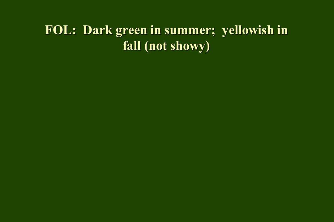 FOL: Dark green in summer; yellowish in fall (not showy)