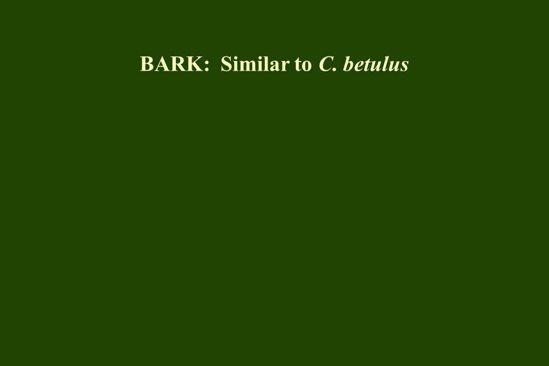 BARK: Similar to C. betulus