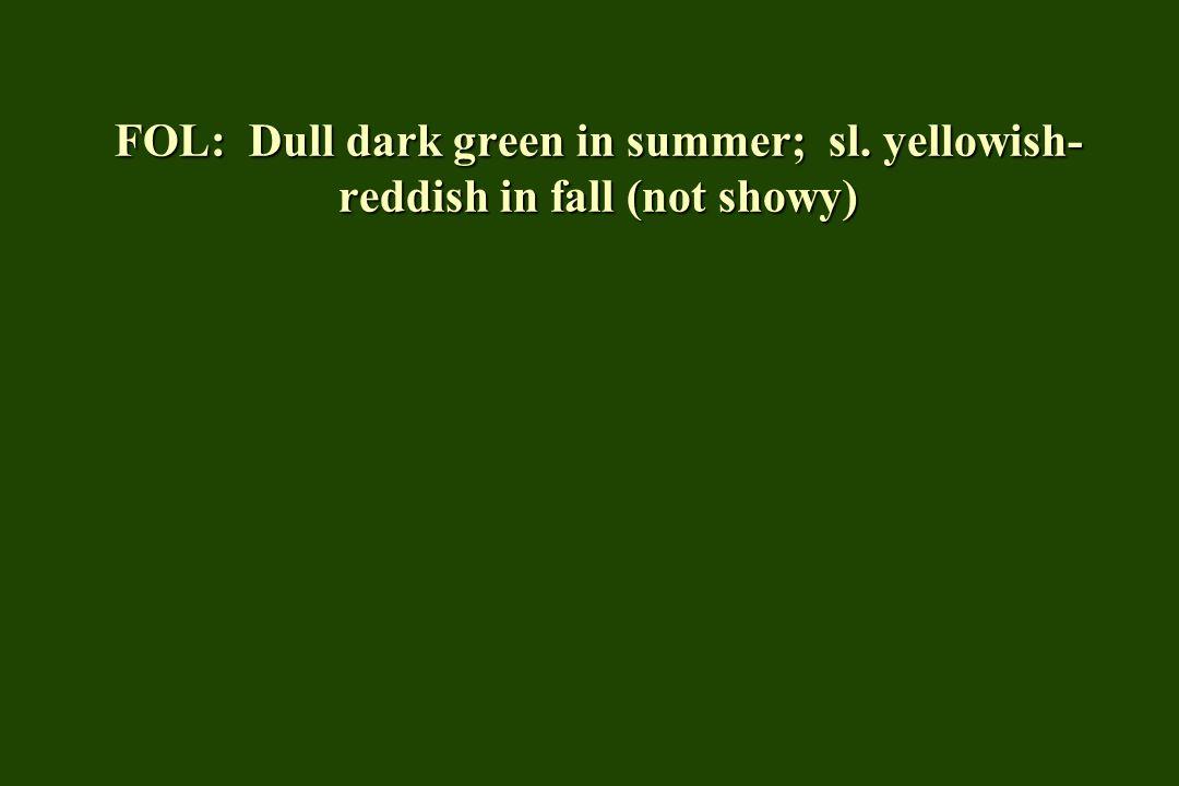 FOL: Dull dark green in summer; sl. yellowish- reddish in fall (not showy)
