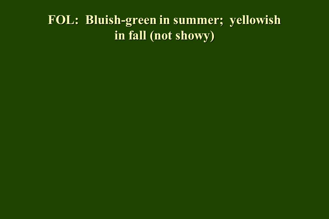 FOL: Bluish-green in summer; yellowish in fall (not showy)