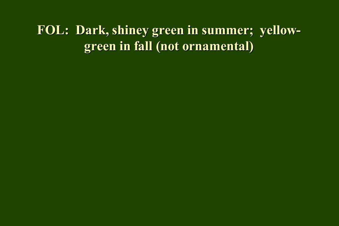 FOL: Dark, shiney green in summer; yellow- green in fall (not ornamental)