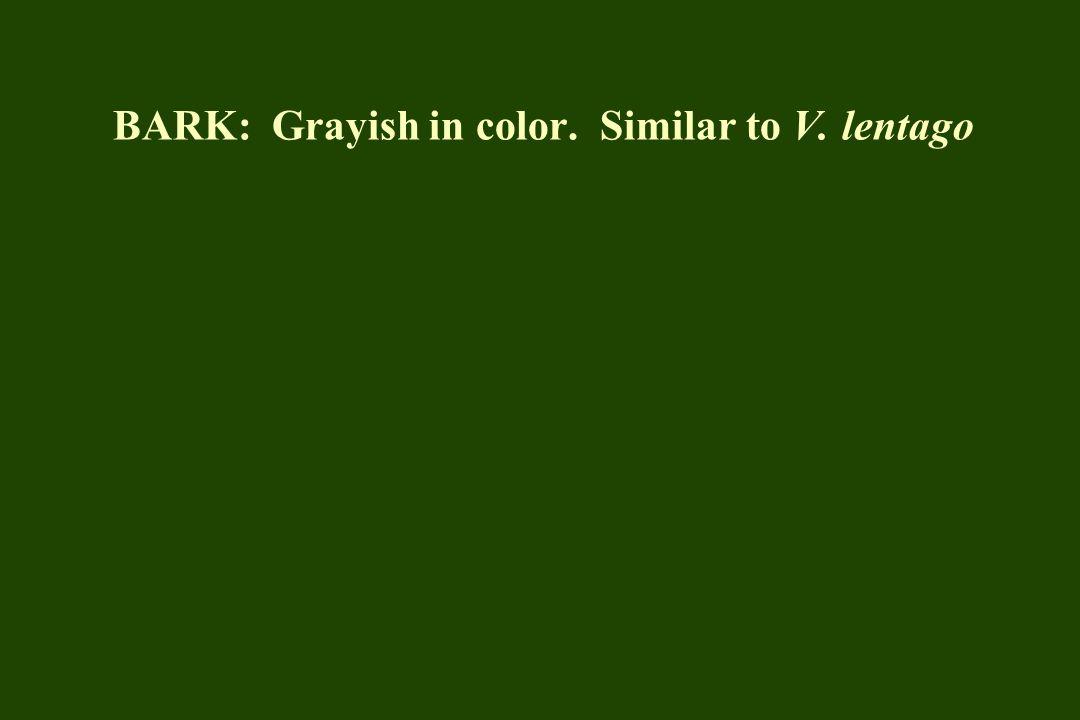 BARK: Grayish in color. Similar to V. lentago