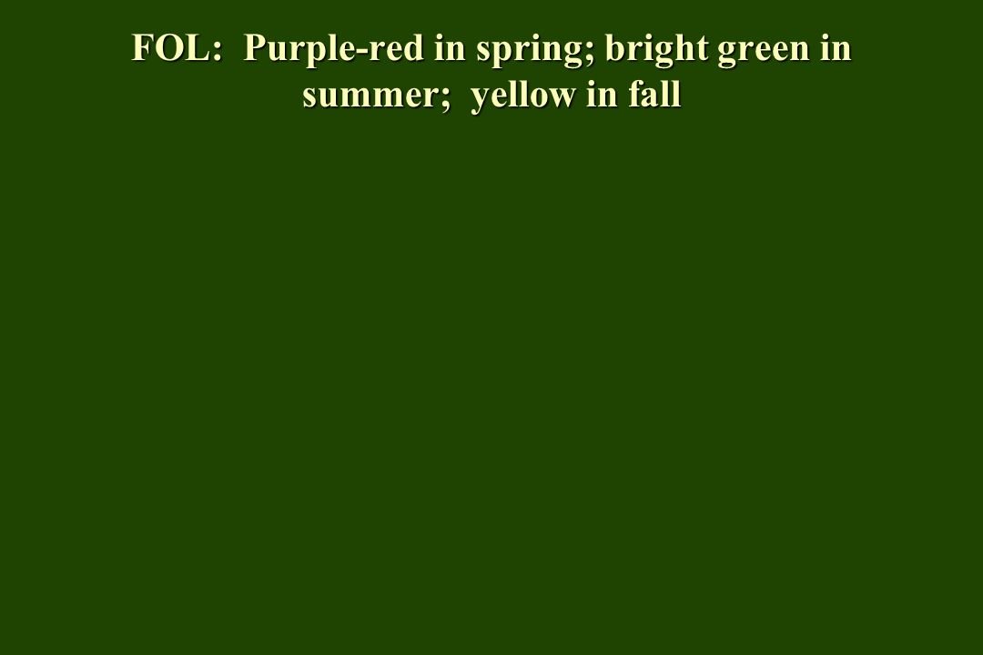 FOL: Lustrous dark green in summer; yellow- red in fall (ok)