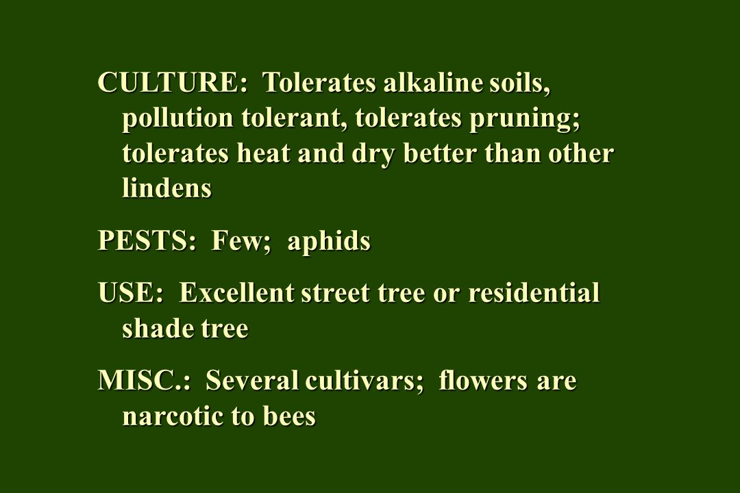 CULTURE: Tolerates alkaline soils, pollution tolerant, tolerates pruning; tolerates heat and dry better than other lindens PESTS: Few; aphids USE: Excellent street tree or residential shade tree MISC.: Several cultivars; flowers are narcotic to bees