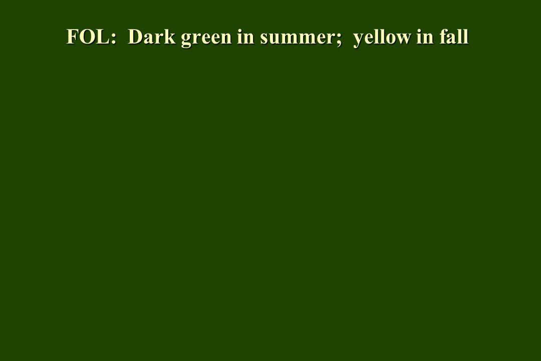 FOL: Dark green in summer; yellow in fall