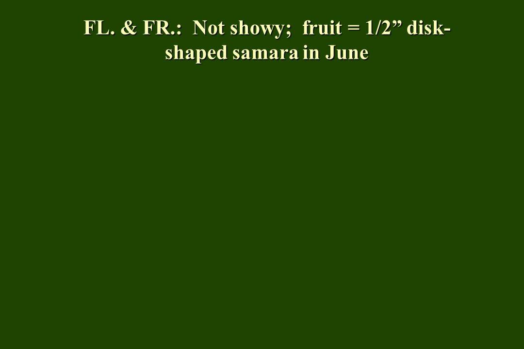 FL. & FR.: Not showy; fruit = 1/2 disk- shaped samara in June