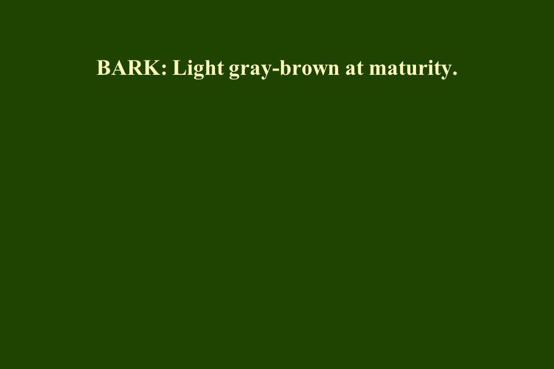 BARK: Light gray-brown at maturity.