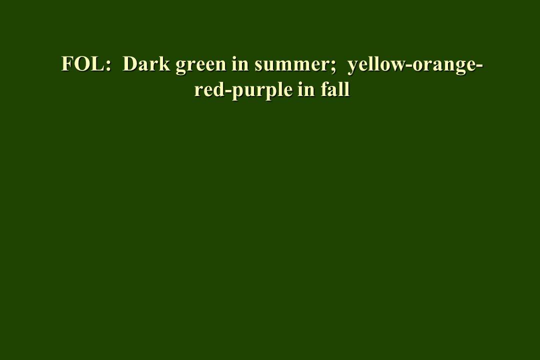 FOL: Dark green in summer; yellow-orange- red-purple in fall
