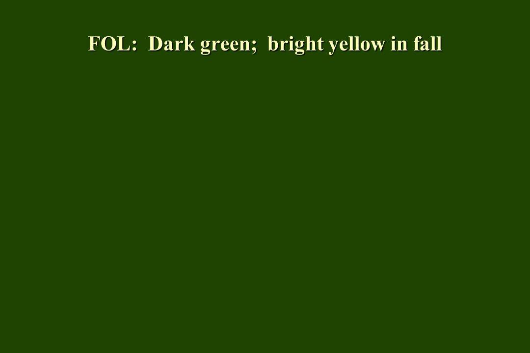 FOL: Dark green; bright yellow in fall