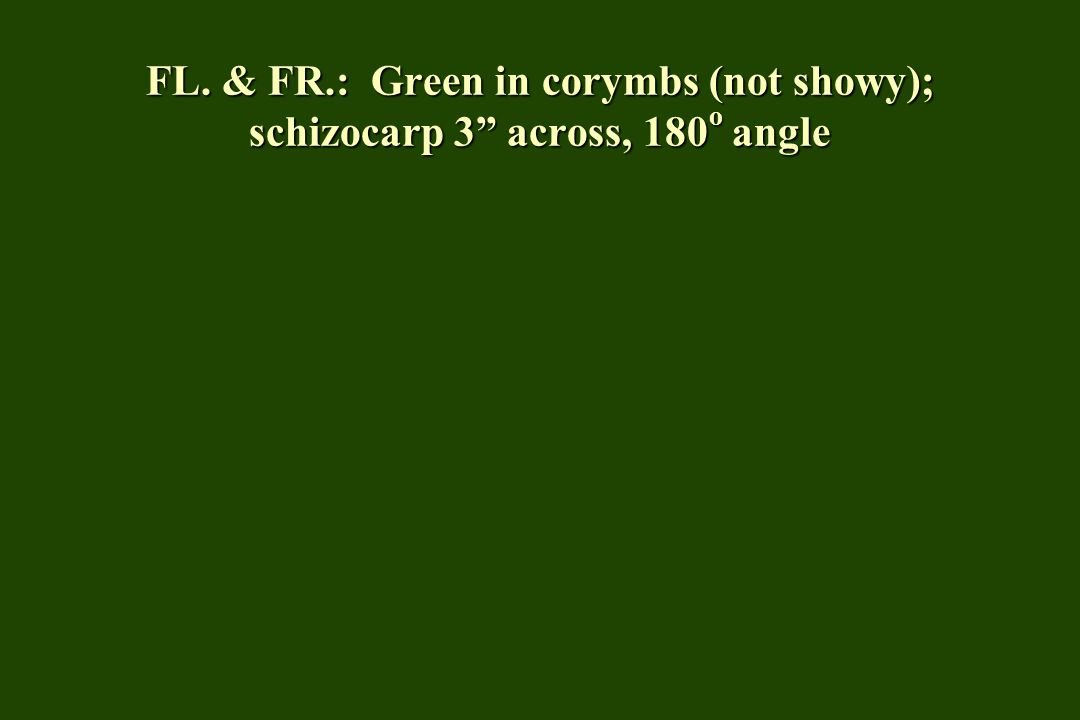 FL. & FR.: Green in corymbs (not showy); schizocarp 3 across, 180 o angle
