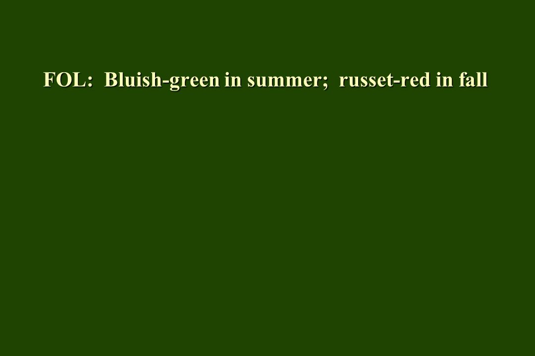 FOL: Bluish-green in summer; russet-red in fall