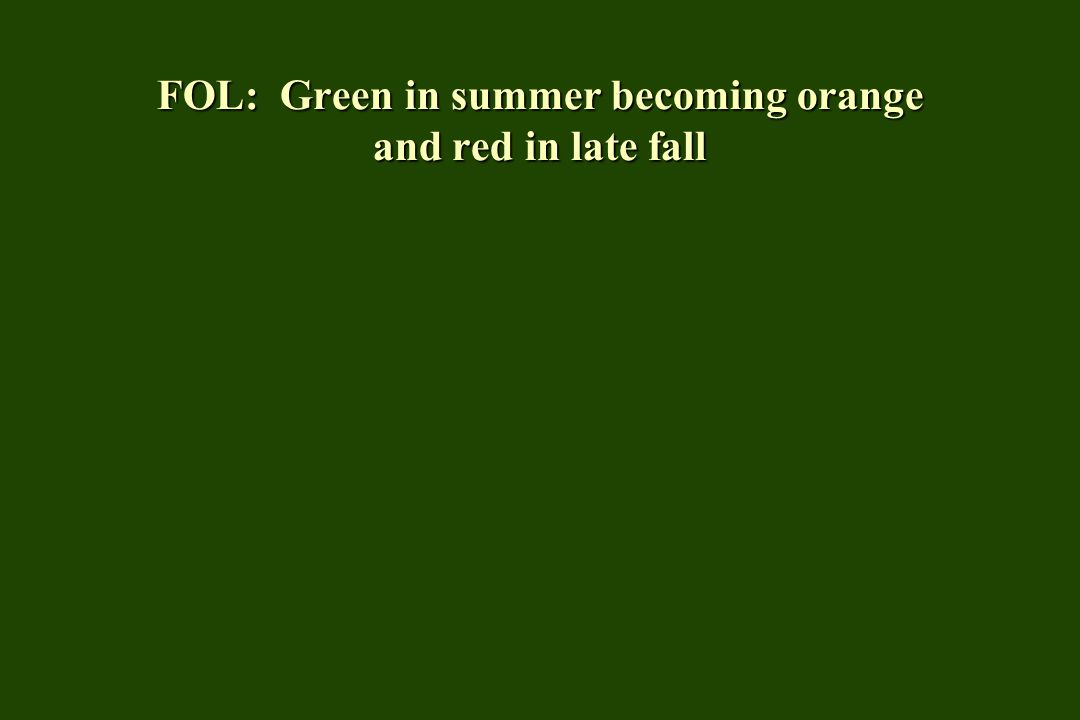 FOL: Green in summer becoming orange and red in late fall