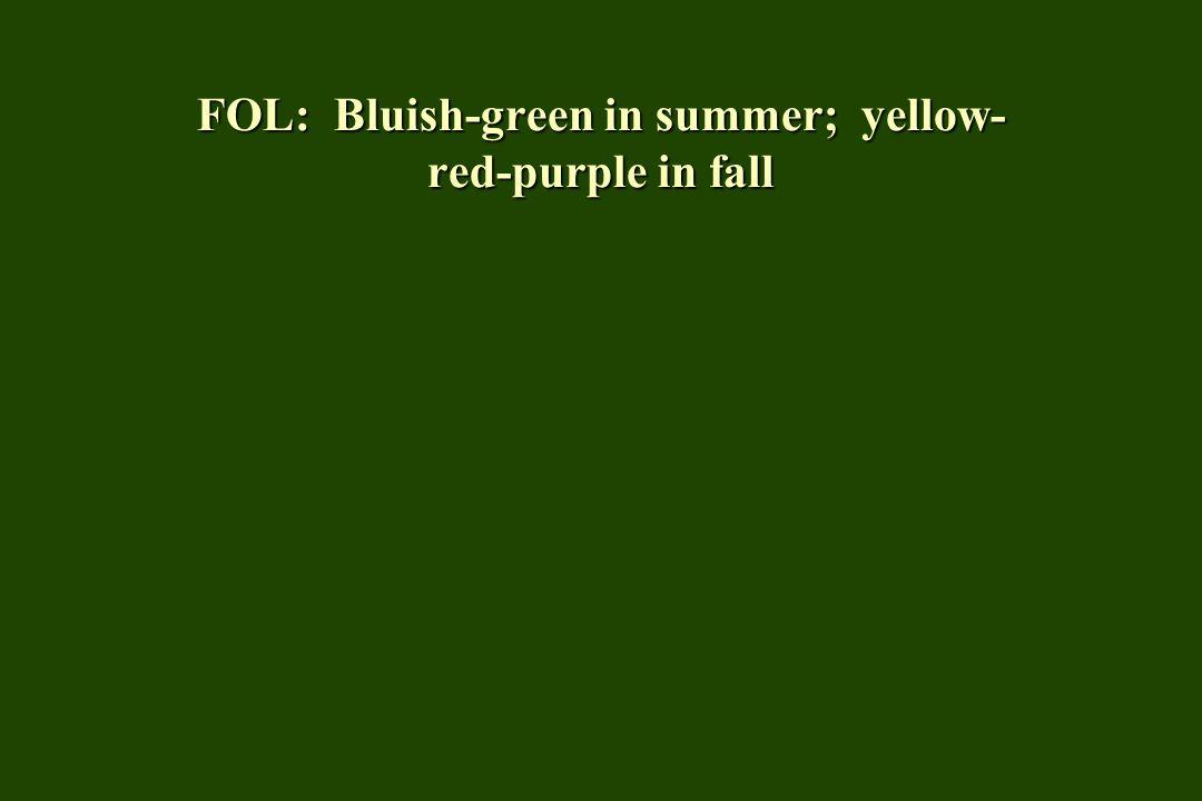 FOL: Bluish-green in summer; yellow- red-purple in fall