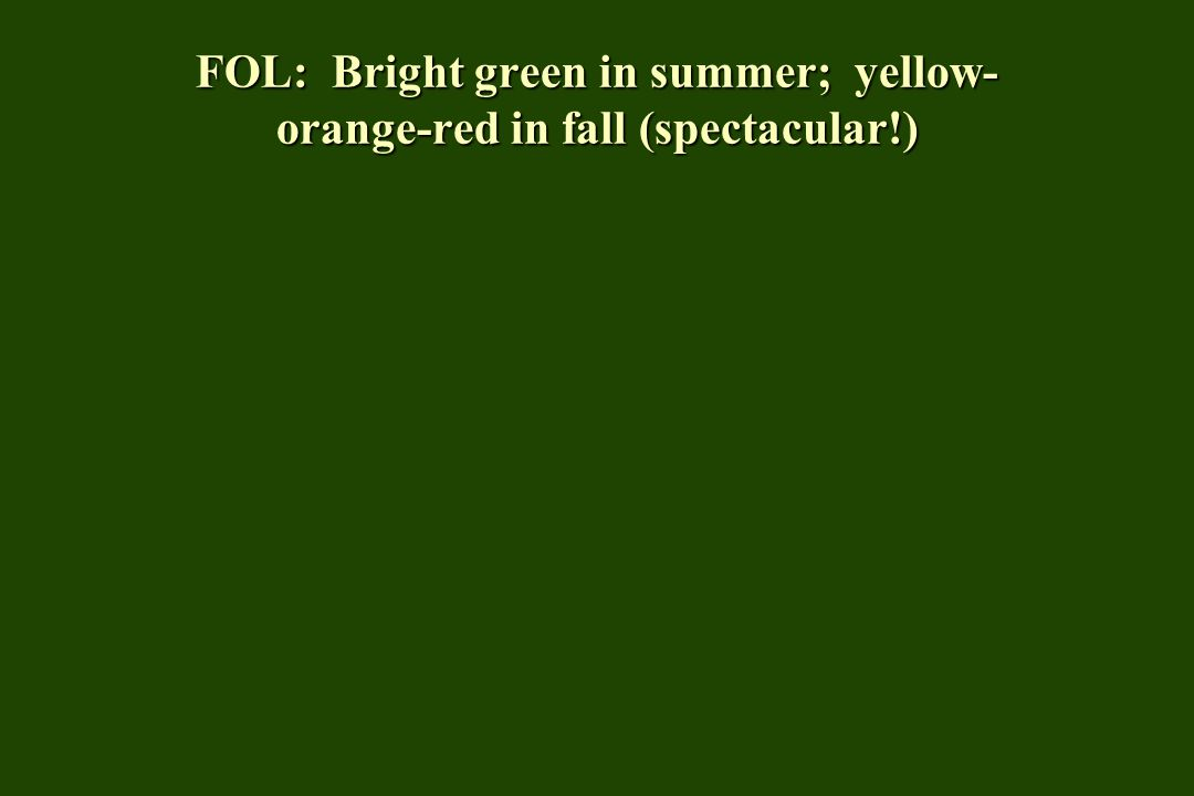 FOL: Bright green in summer; yellow- orange-red in fall (spectacular!)