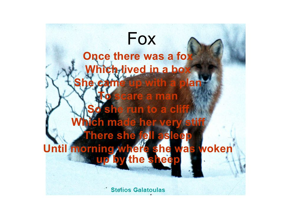 Fox Once there was a fox Which lived in a box She came up with a plan To scare a man So she run to a cliff Which made her very stiff There she fell asleep Until morning where she was woken up by the sheep Stelios Galatoulas