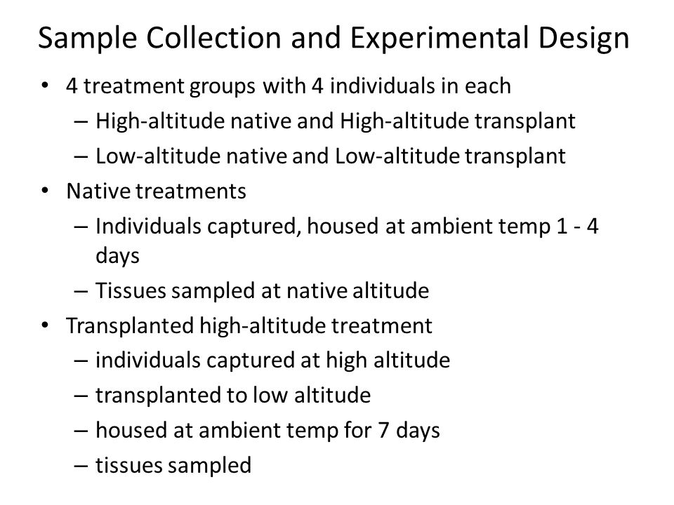 4 treatment groups with 4 individuals in each – High-altitude native and High-altitude transplant – Low-altitude native and Low-altitude transplant Native treatments – Individuals captured, housed at ambient temp 1 - 4 days – Tissues sampled at native altitude Transplanted high-altitude treatment – individuals captured at high altitude – transplanted to low altitude – housed at ambient temp for 7 days – tissues sampled Sample Collection and Experimental Design