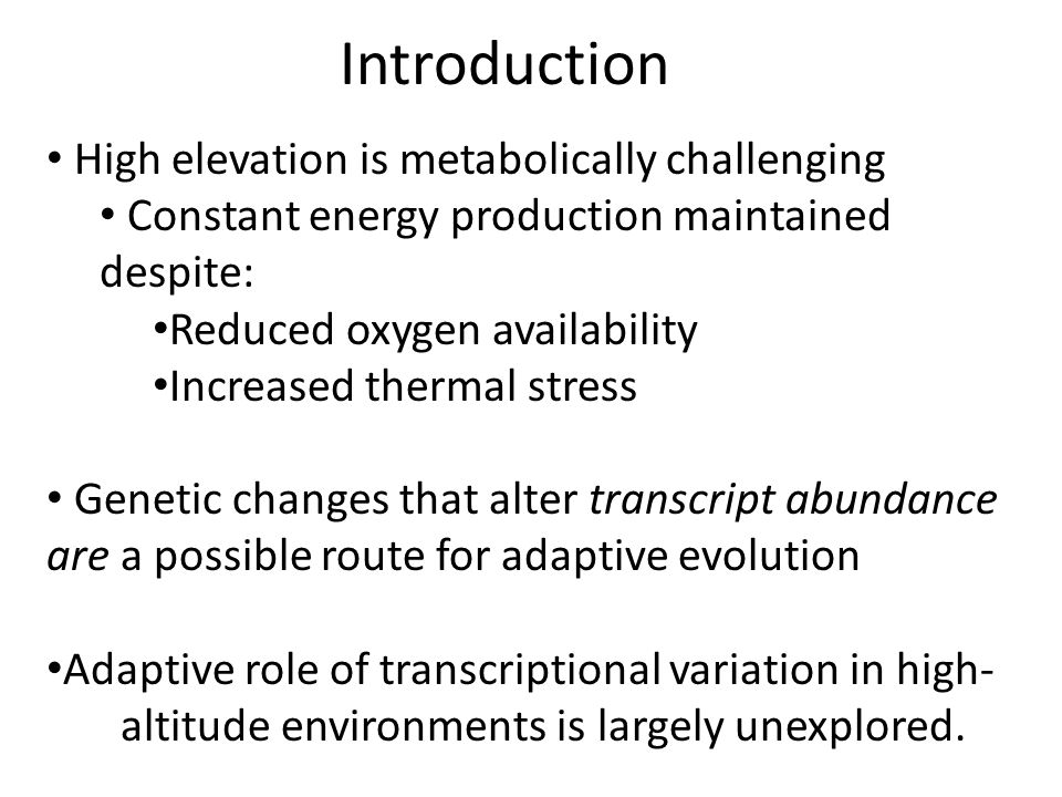 Introduction High elevation is metabolically challenging Constant energy production maintained despite: Reduced oxygen availability Increased thermal stress Genetic changes that alter transcript abundance are a possible route for adaptive evolution Adaptive role of transcriptional variation in high- altitude environments is largely unexplored.