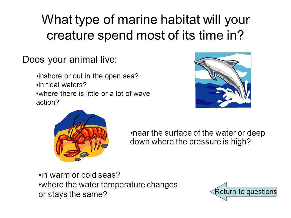 What type of marine habitat will your creature spend most of its time in.