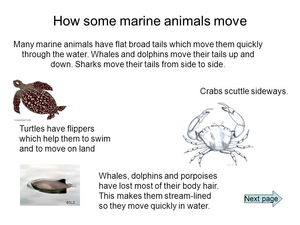 How some marine animals move Whales, dolphins and porpoises have lost most of their body hair.