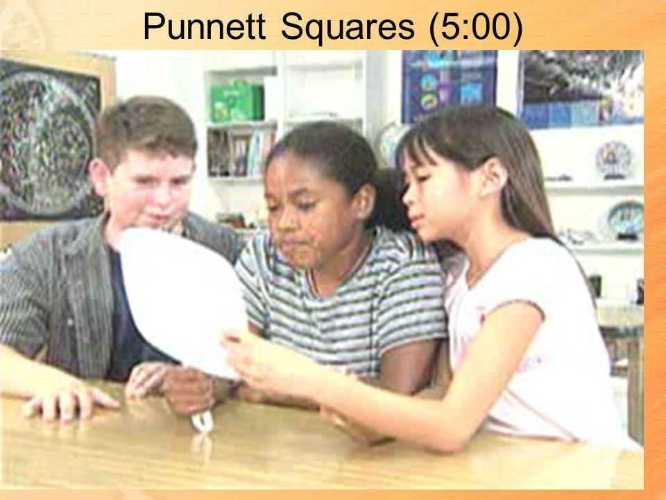 Punnett Squares (5:00)