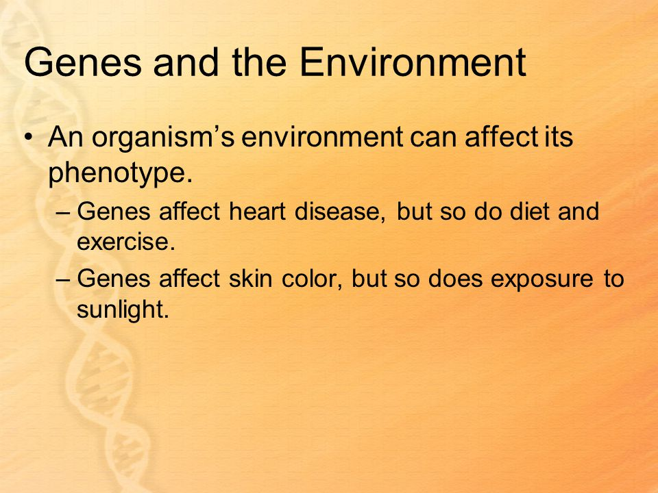 Genes and the Environment An organism's environment can affect its phenotype.