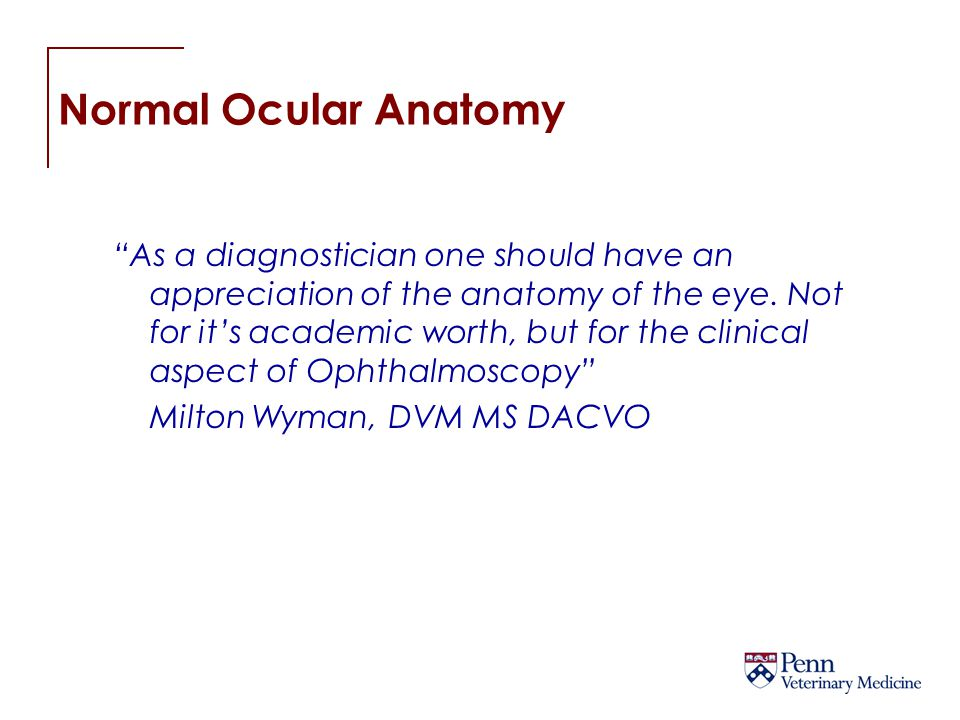 Normal Ocular Anatomy The Fundus is typically divided into the tapetal and nontapetal fundus area.